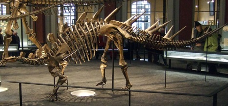 Kentrosaurus in the Museum für Naturkunde